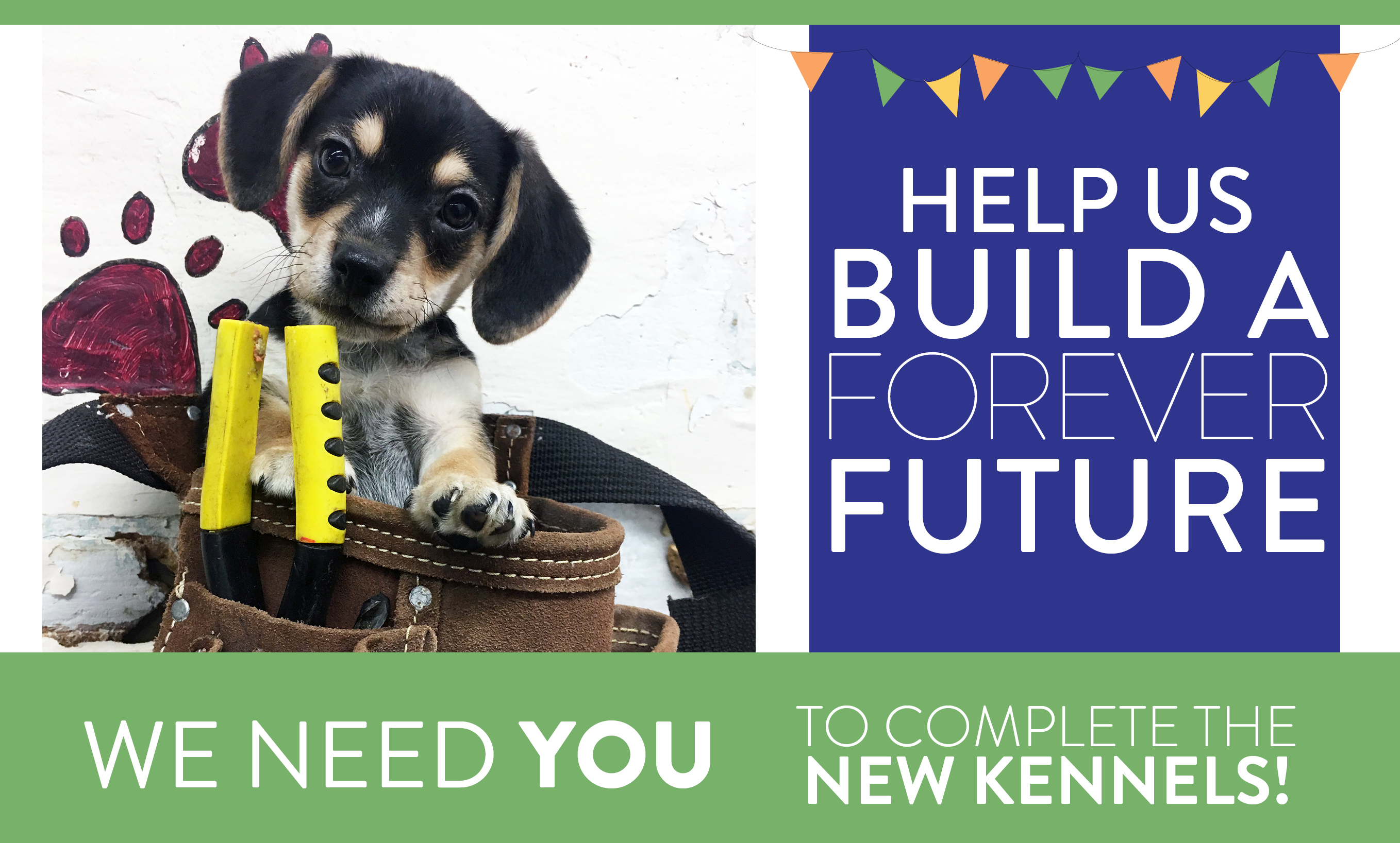 Help us build a forever future - Providence Animal Center