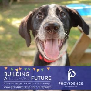 Providence Animal Center case for support
