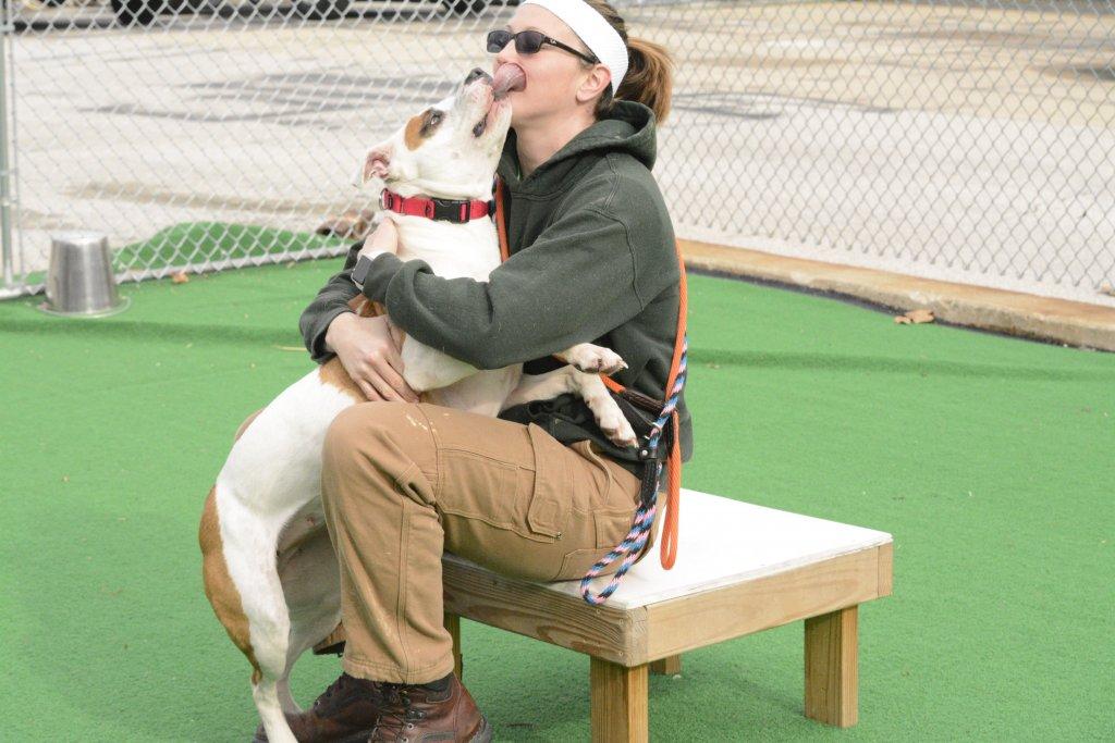 Providence Animal Center Fun Agility & Tricks Class