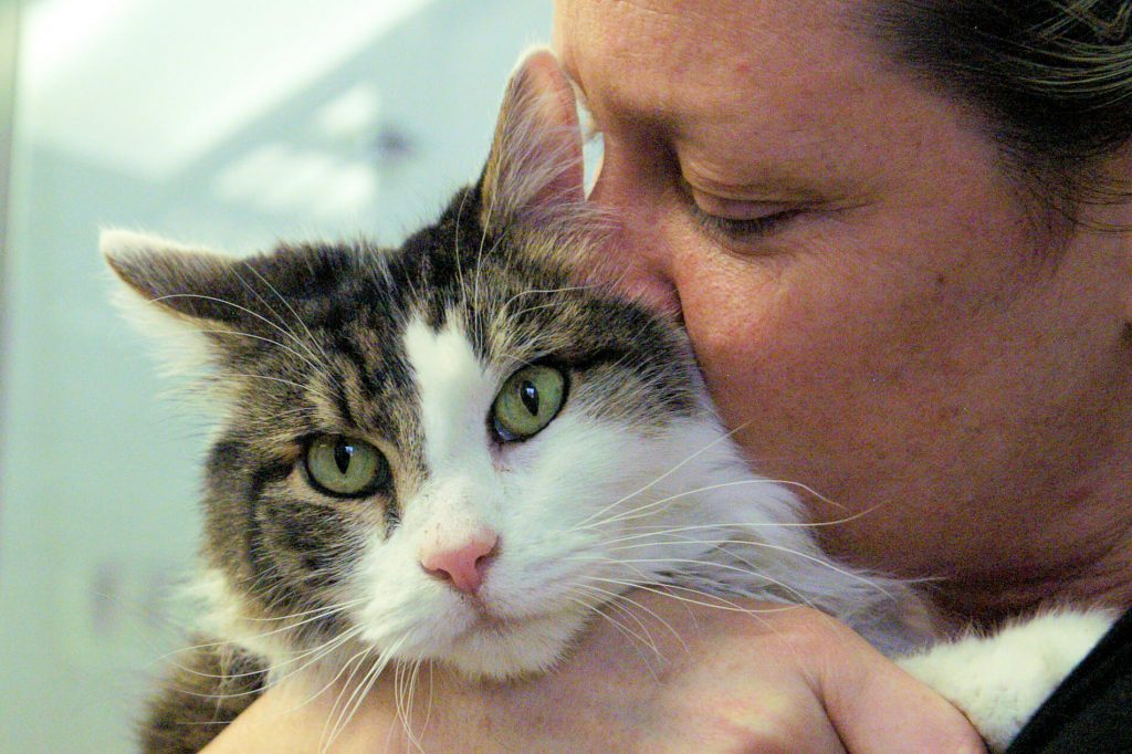 Providence Animal Center cat