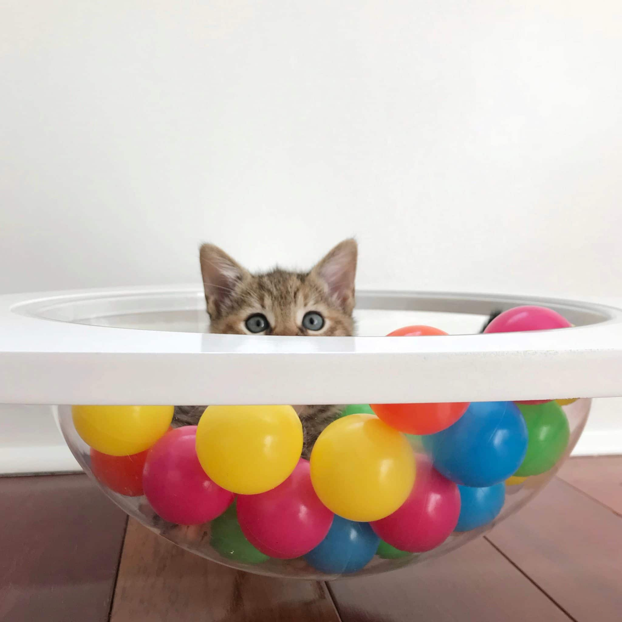 kitten in ball pit